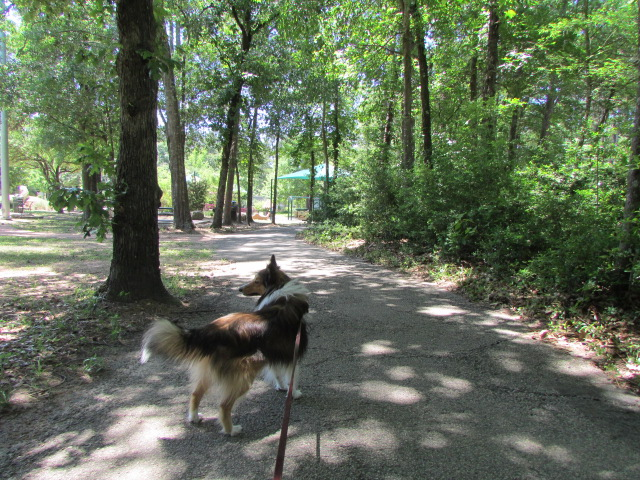Taking a walk along the 1/2 mile trail at Kasmiersky Park